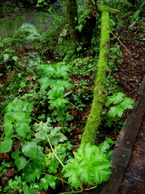 San Francisco travel: Muir Woods