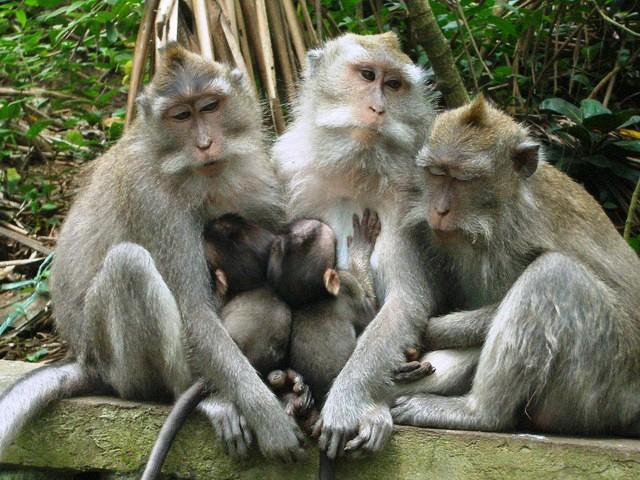 Ubud Monkey Forest