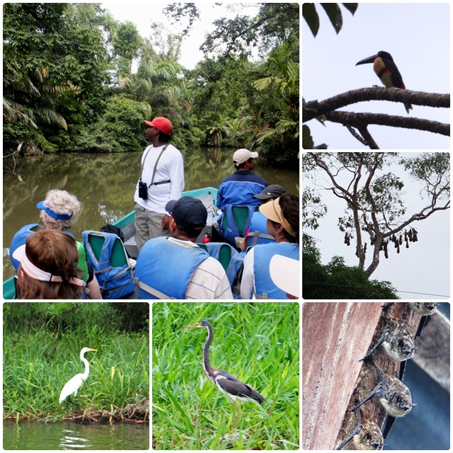 Another boat tour in Tortuguero