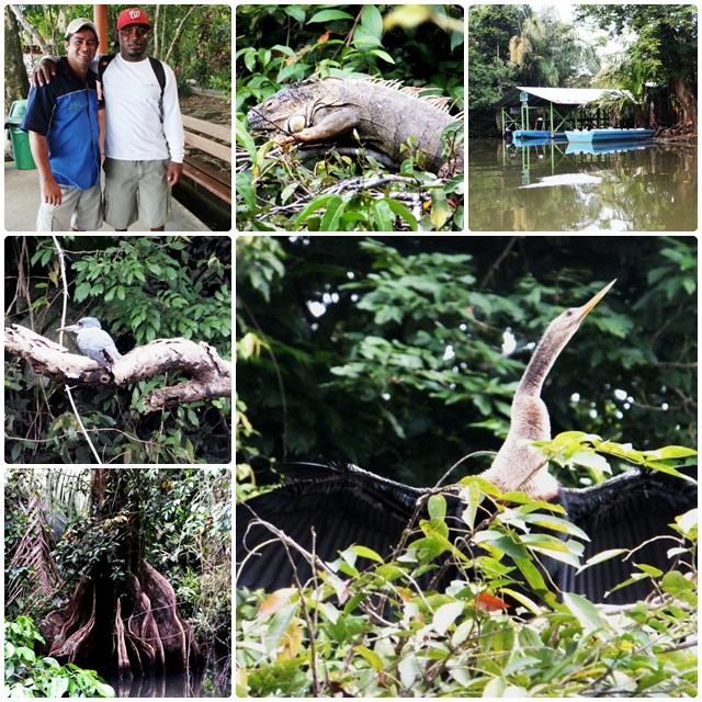 Amazing wildlife in Tortuguero