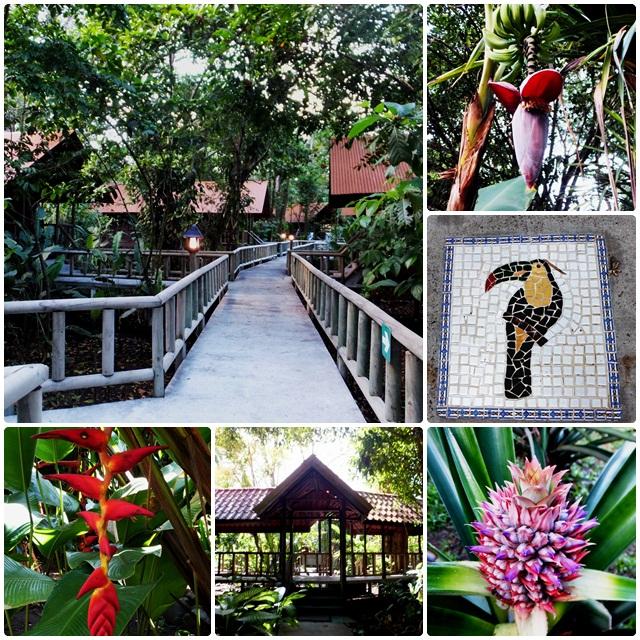 The grounds of Aninga Lodge