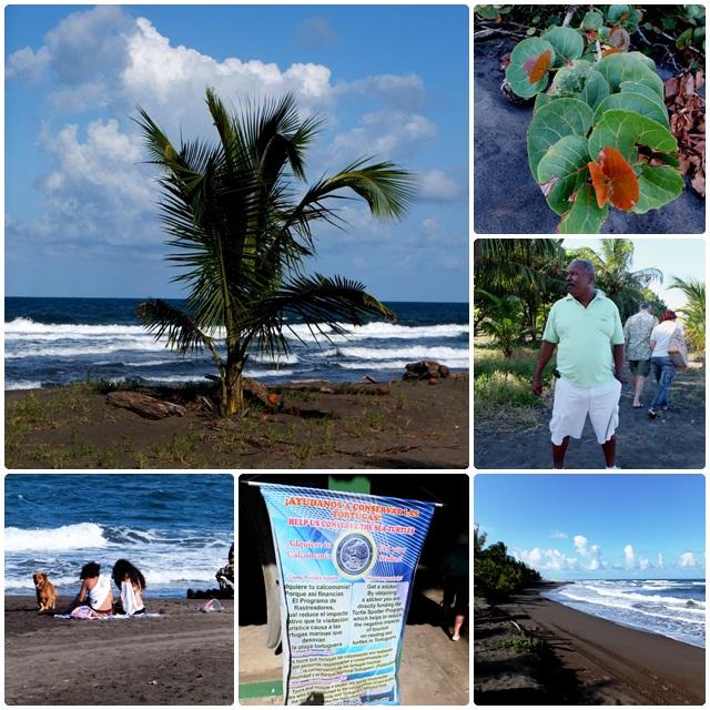 Tortuguero's Caribbean beach