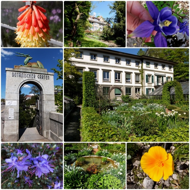 An urban oasis: the Botanical Garden of Bern Switzerland