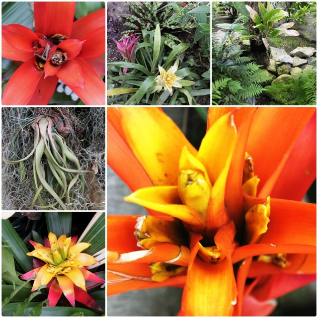 Bromeliads & other tropical varieties in the Buffalo Botanical Gardens