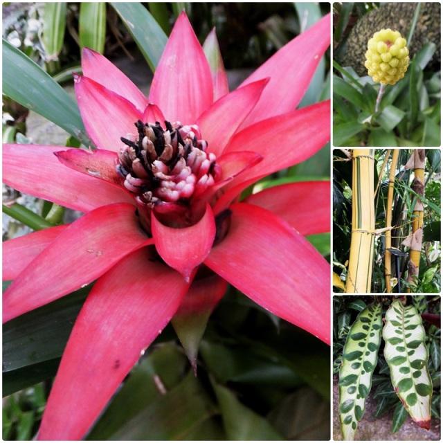 Tropical vegetation at the Buffalo Botanical Gardens