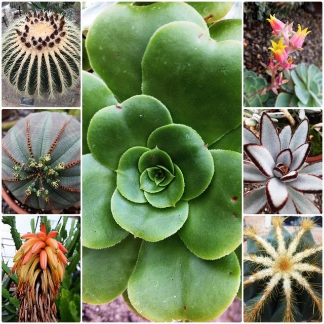 Succulents and cacti at the Buffalo Botanical Gardens