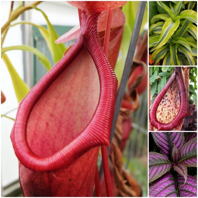 Fascinating flesh-eating plants at the Buffalo Botanical Gardens