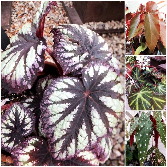 Medicinal Plants at the Bufalo Botanical Gardens