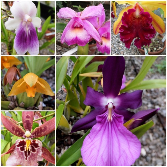 Orchids are among the most popular exhibits at the Buffalo Botanical Gardens