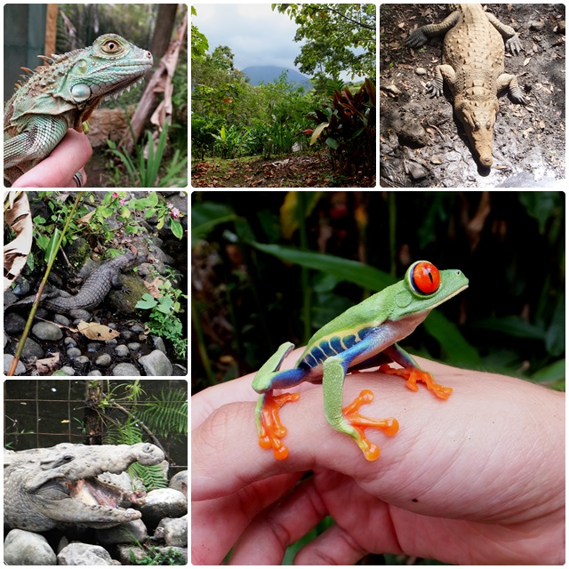 Curious creatures at Arenal Natura