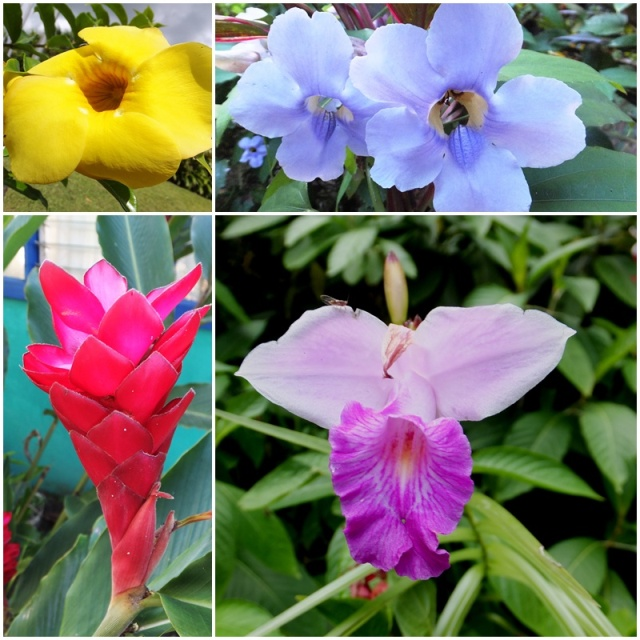 Gorgeous tropical flowers at Arenal Springs Resort