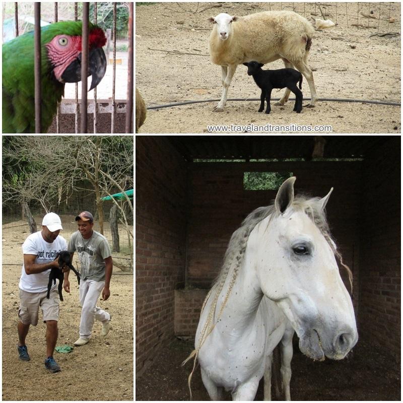 Hacienda El Divisadero is a real working farm