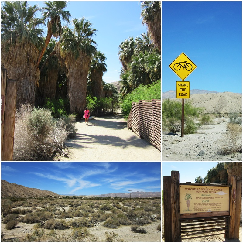 A visit to the Coachella Valley Preserve