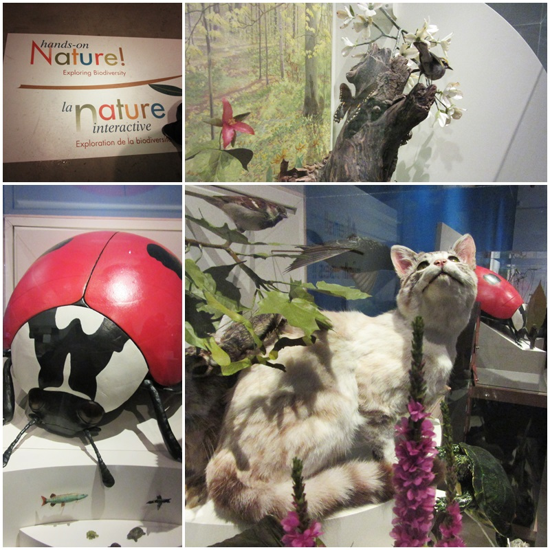 The Nature Exhibit at the Niagara Falls History Museum