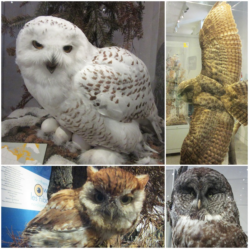 The Owl Exhibit at the Niagara Falls History Museum