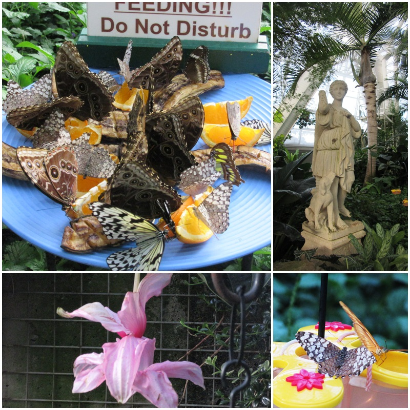Feeding butterflies should not be disturbed